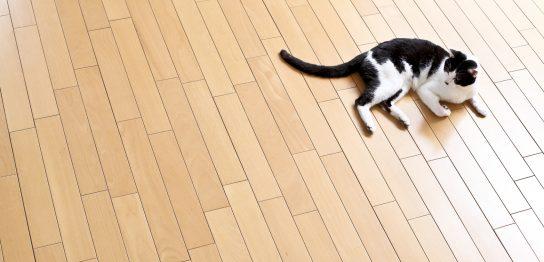 猫のことわざを英語で
