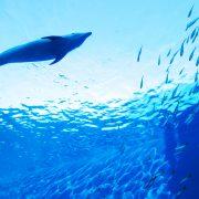 魚のつくことわざを英語で何て言う?