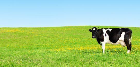 牛のつくことわざ