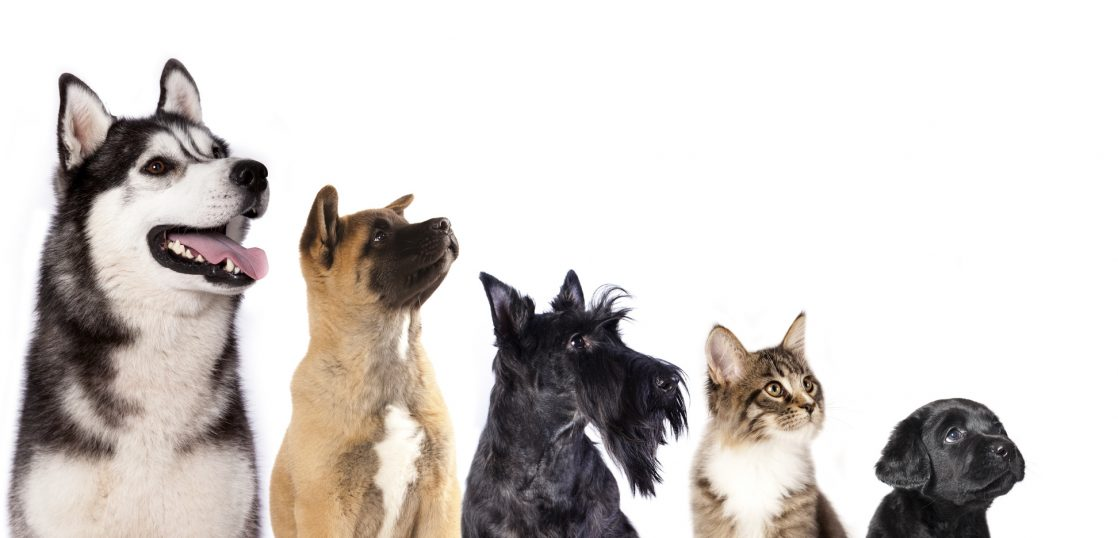犬のコトワザ