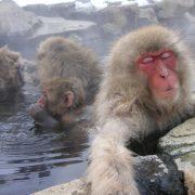 猿に関することわざを英語に