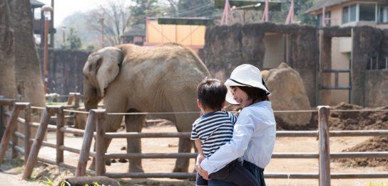 英語で何て言う?「動物園」を英語で学ぼう!