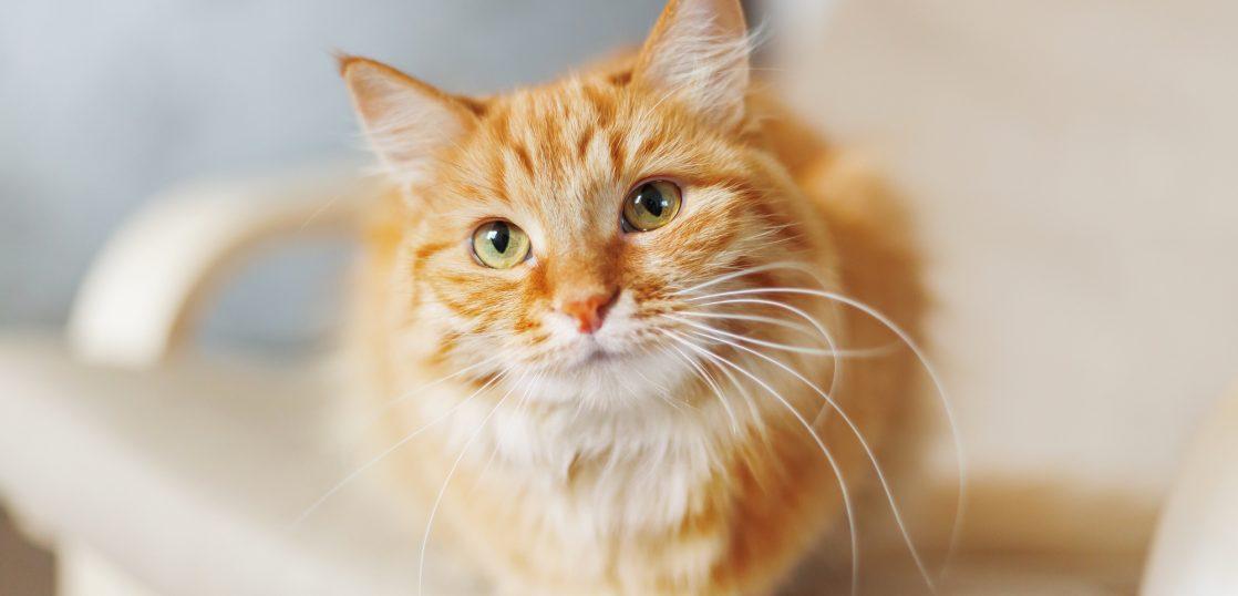 英語で何て言う?「ペット」に関する英語を学ぼう!