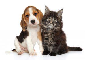 犬 vs 猫