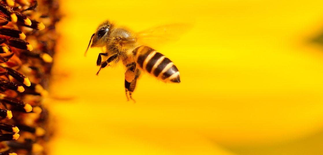 英語で何て言う?「ハチ」に関する英語を学ぼう!