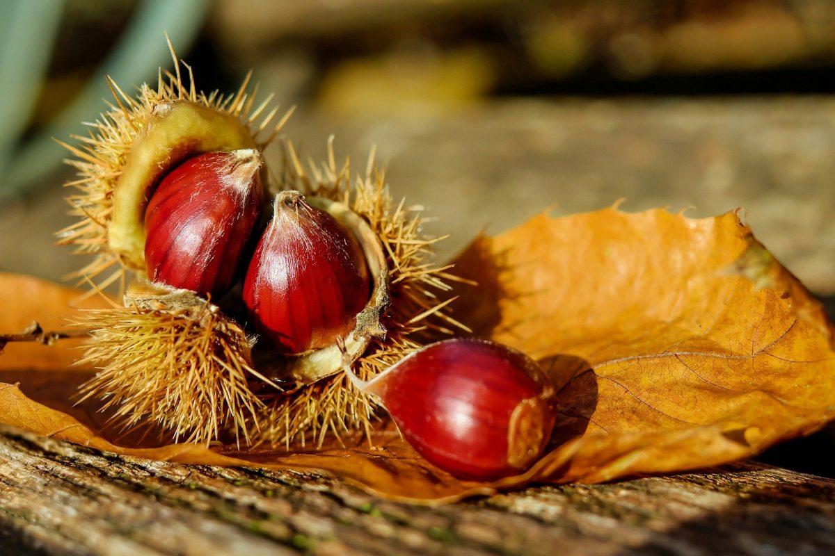栗のイガや栗の殻を意味する英単語